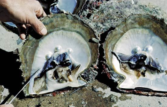 perle coltivate come riconoscere perle vere perle false